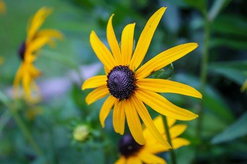 คลังภาพถ่ายฟรี ของ ข้างนอก, ซูม, ดอกทานตะวัน, ดอกไม้สีเหลือง