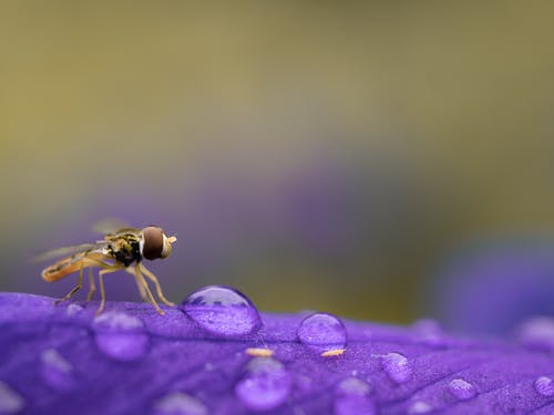 Close-Up Photo of Hoverfly