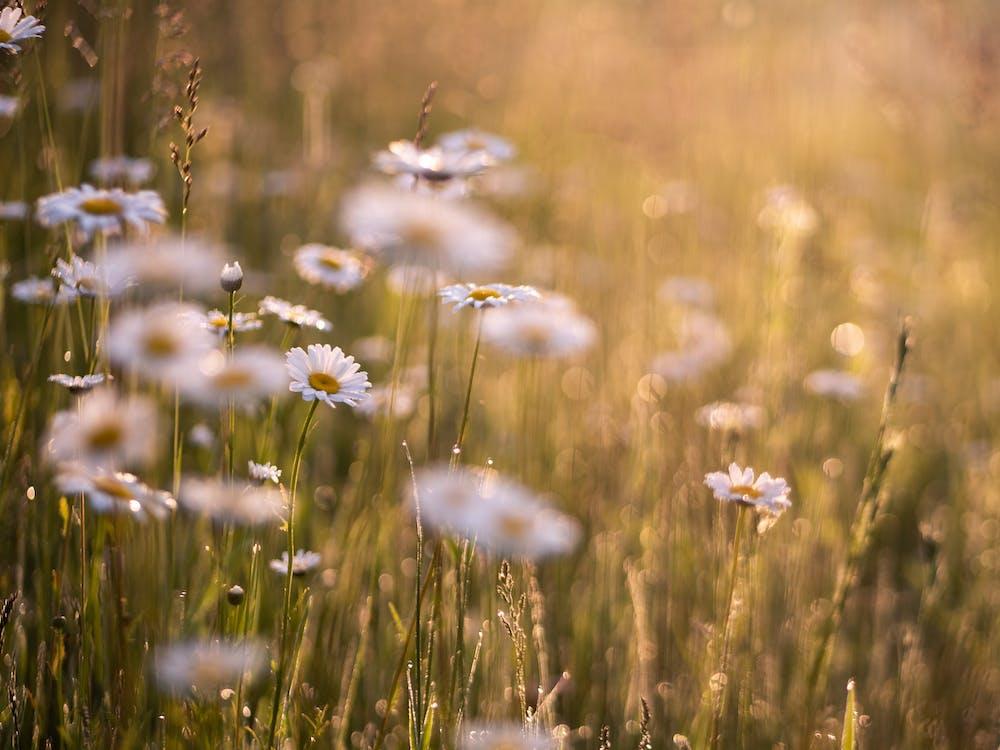bílé květy, čerstvý, flóra