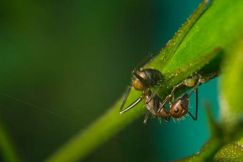 Close-Up Photo of Ant on Green Leaf