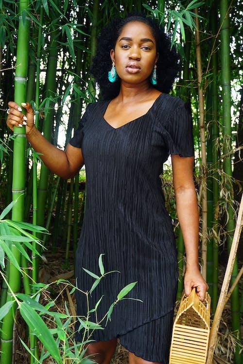 Imagine de stoc gratuită din afro păr, bambus, căutare, chip