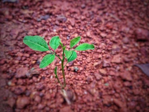 Gratis lagerfoto af frøvækst, grøn, liv, plante