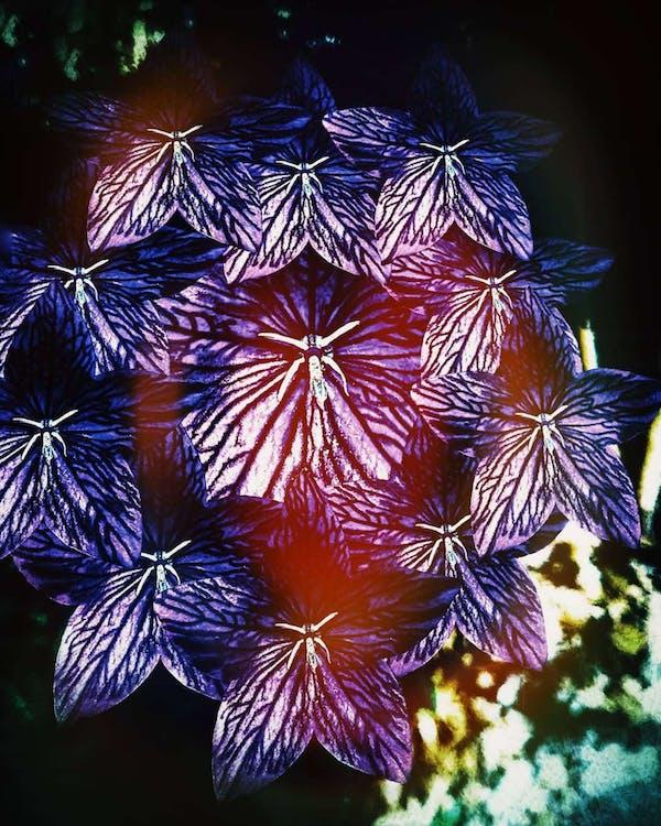 #flowers, #kopiere, #lightleak