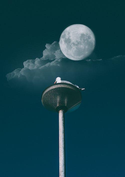 คลังภาพถ่ายฟรี ของ anial, กลางคืน, กลางแจ้ง, จันทรา
