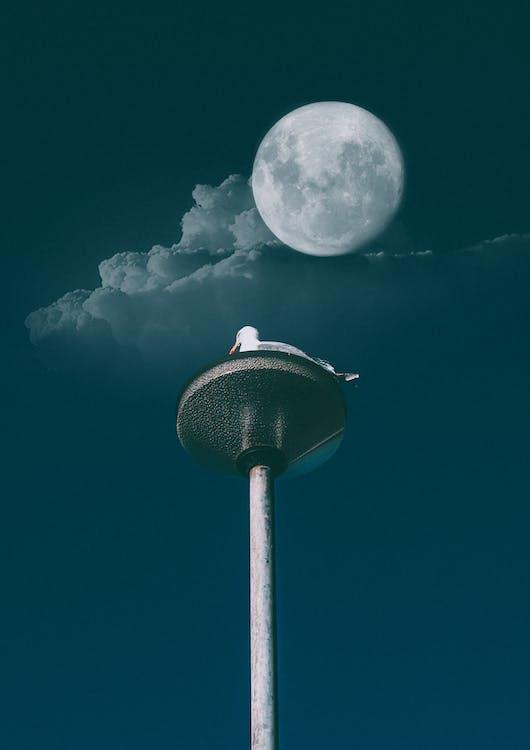 White Duck Under Full Moon Digital Wallpaper