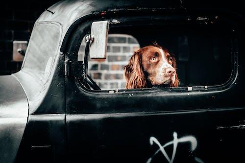 Gratis lagerfoto af årgang, bil, dyr, gade
