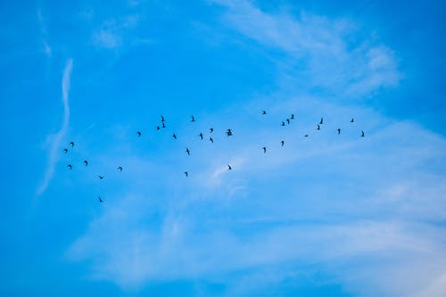 Free stock photo of birds, blue sky, clouds
