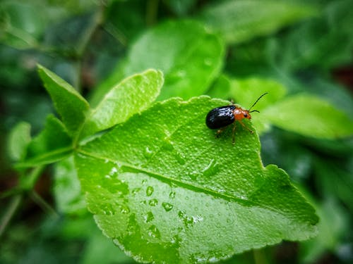 Gratis lagerfoto af blad, bug makro, grønt blad, insekter