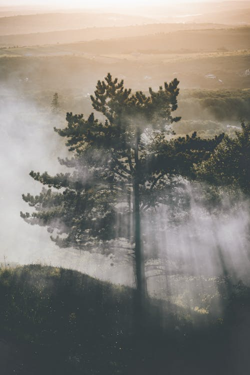 Photo of Tree Surrounded by Fog