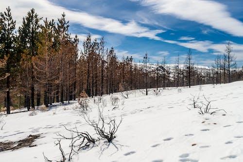Gratis stockfoto met blauw, blauwe lucht, bomen, hemel