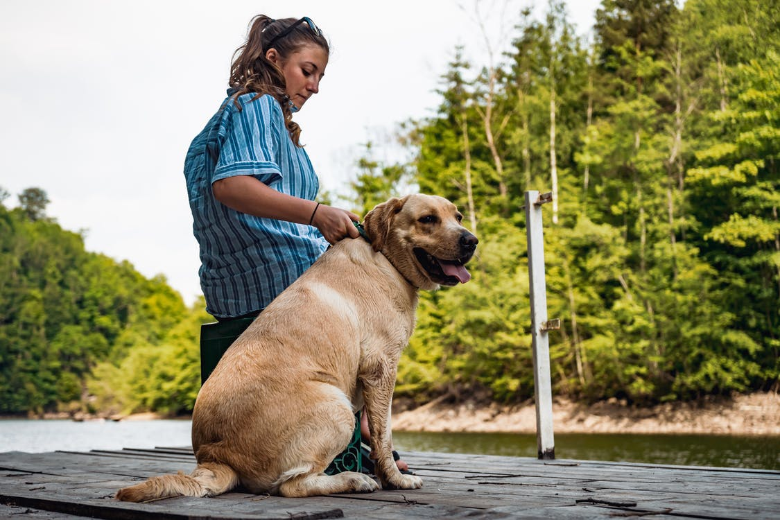 Photo of Woman in Blue Shirt Sitting Beside Her Dog on Pier
