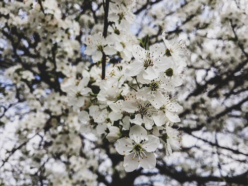 Foto stok gratis bunga musim semi, bunga-bunga, bunga-bunga indah, musim semi