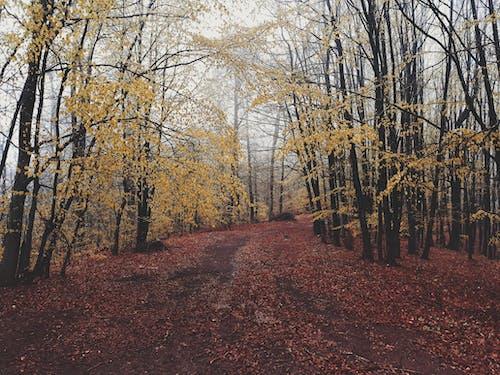 Foto stok gratis cokelat, dedaunan musim gugur, hutan, hutan suasana musim gugur