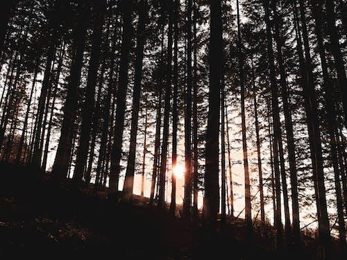 Foto stok gratis matahari, matahari keemasan, matahari terbenam, pohon