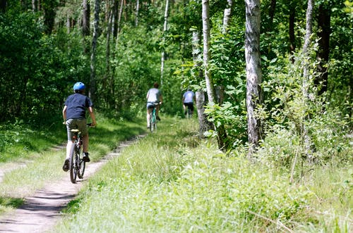 Kostenloses Stock Foto zu bäume, blätter, fahrräder, fußweg