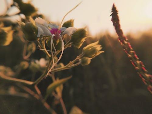 Foto profissional grátis de entardecer, flor bonita, macro