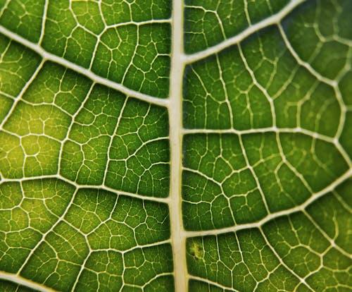 Foto profissional grátis de #macro #macrophotography #leaf