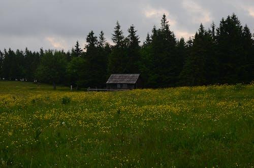 Fotobanka sbezplatnými fotkami na tému beforerain, chata, rozkvitnutá lúka, slovinsko