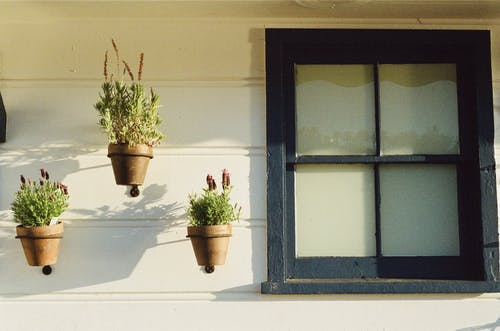 Green Potted Plants Beside Glass Window