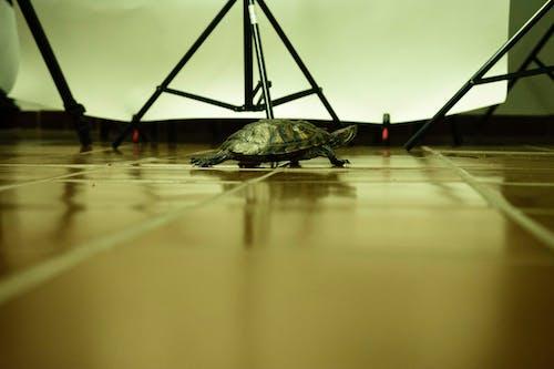Free stock photo of art studio, design space, sea turtle, studio