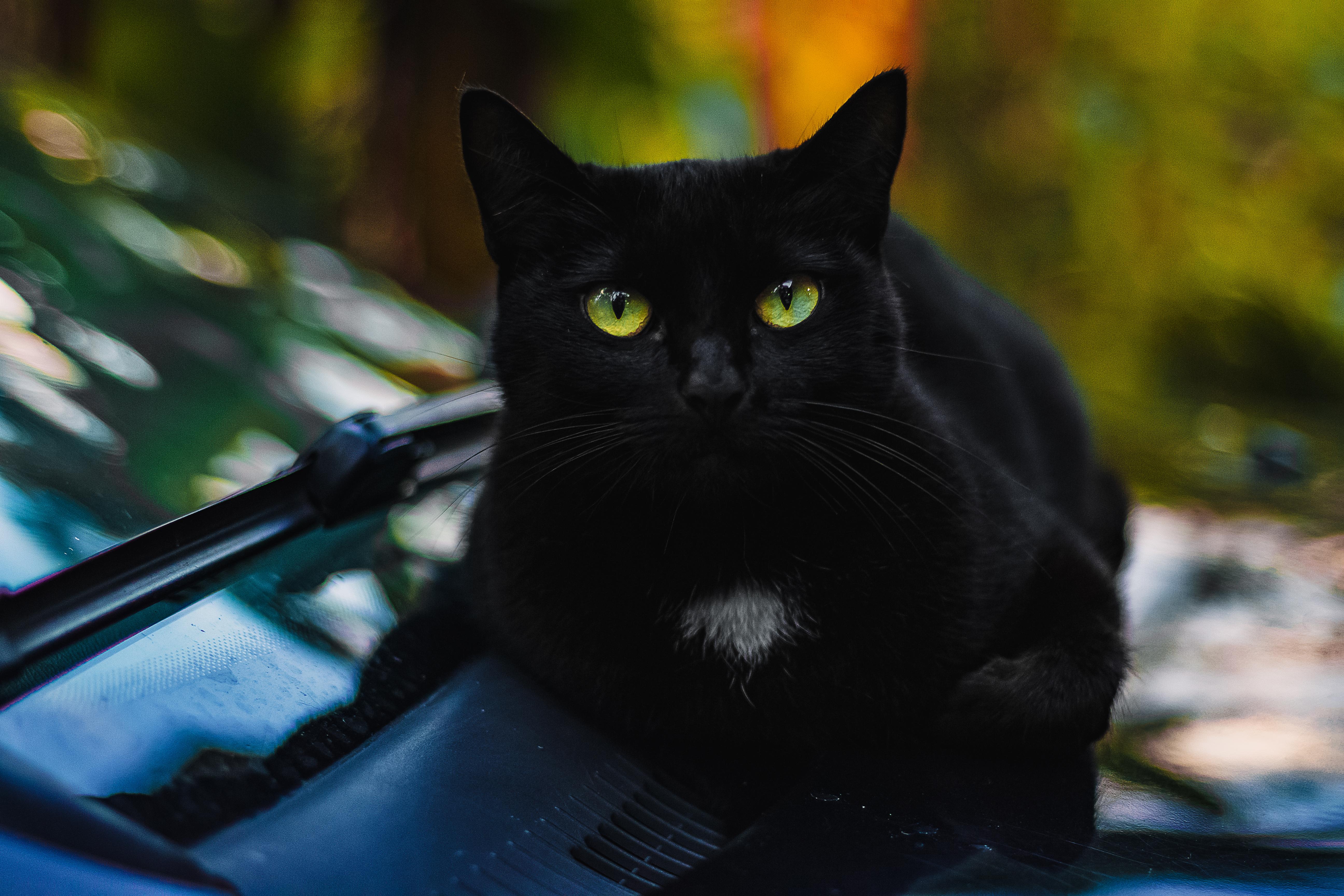 KočkaNosDomácí Zvíře · Kotě, Kočka, Chlupatou Kočičku, Fajn.