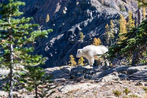 Immagine gratuita di alberi, ambiente, animale, bianco