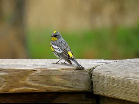 Close-up of Bird  on Wood