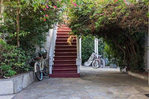 Δωρεάν στοκ φωτογραφιών με αιλουροειδές, αξιολάτρευτος, αρχιτεκτονική, βήματα