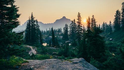 Gratis lagerfoto af bjerg, dagslys, dis, falde