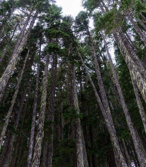 Low Angle Photography of Forest Trees