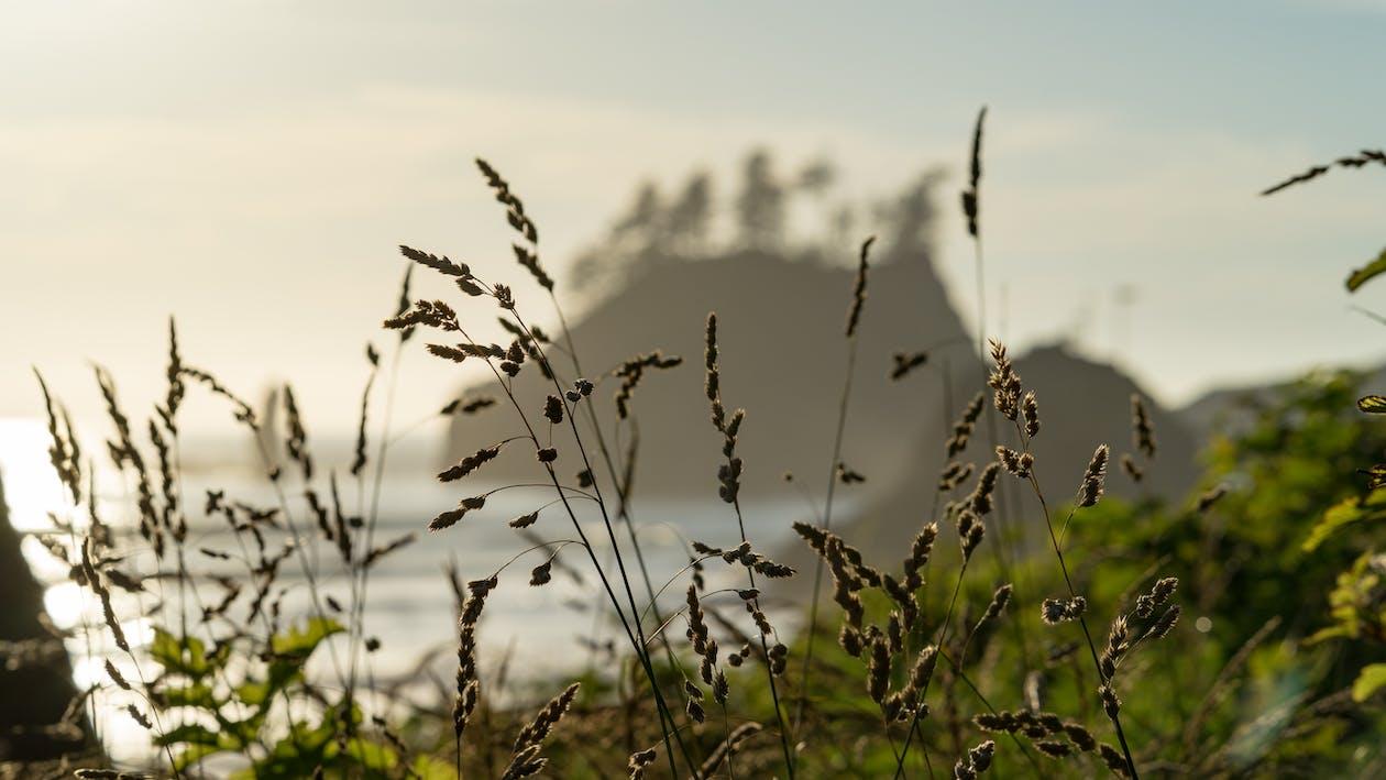al aire libre, amanecer, campo