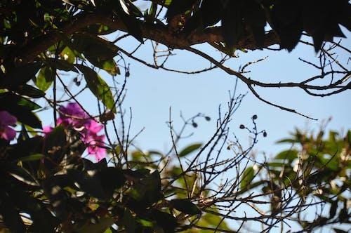açık hava, ağaç, Avustralya, çiçek içeren Ücretsiz stok fotoğraf