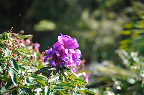 ağaç, Avustralya, bitki, çiçek içeren Ücretsiz stok fotoğraf