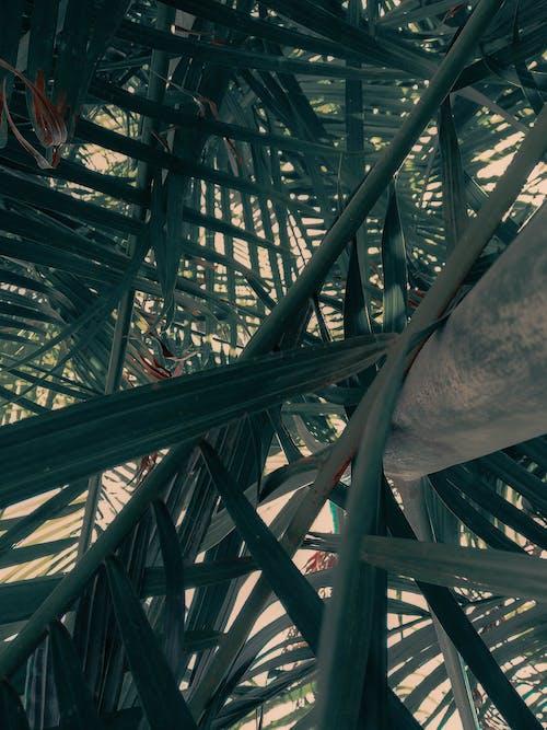 Gratis lagerfoto af baggrund, mørkegrøn, Palmeblade