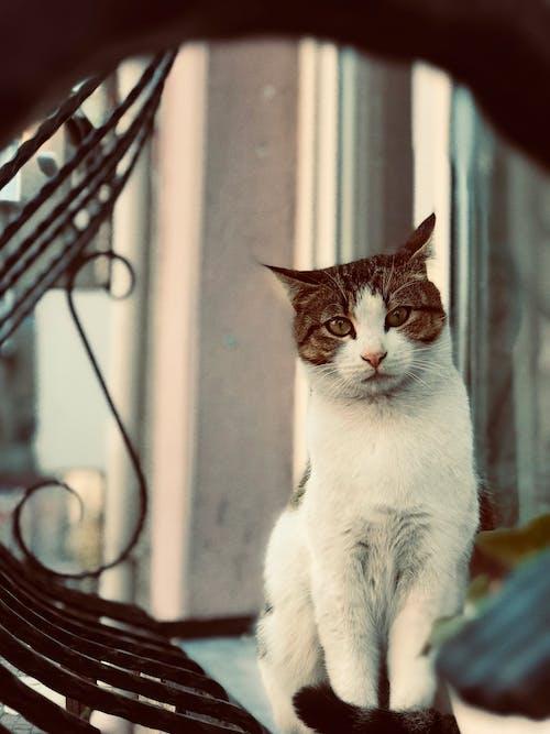 Photos gratuites de animal, animal de compagnie, chat, chat domestique
