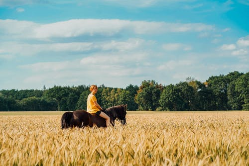 Man Riding Horse on Brown Field Under Blue Sky