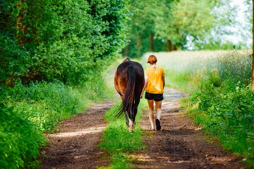 Free stock photo of break time, freedom, horse, nature