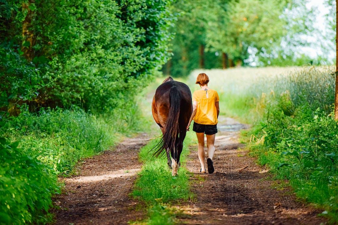 время, лошадь, на природе