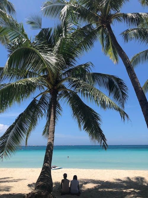 Fotobanka sbezplatnými fotkami na tému dvojica, kokosové palmy, krajina pri mori, more