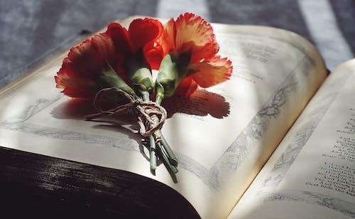 Immagine gratuita di fiori, fiori di garofano, leggendo, letteratura
