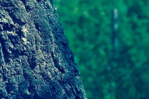 Бесплатное стоковое фото с дерево, дневной свет, Кора, лай