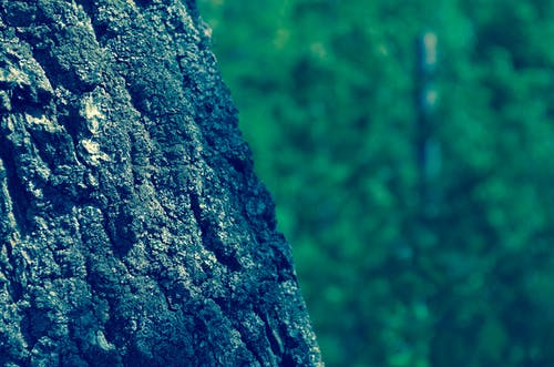 Foto stok gratis batang pohon, berbayang, kayu, kulit