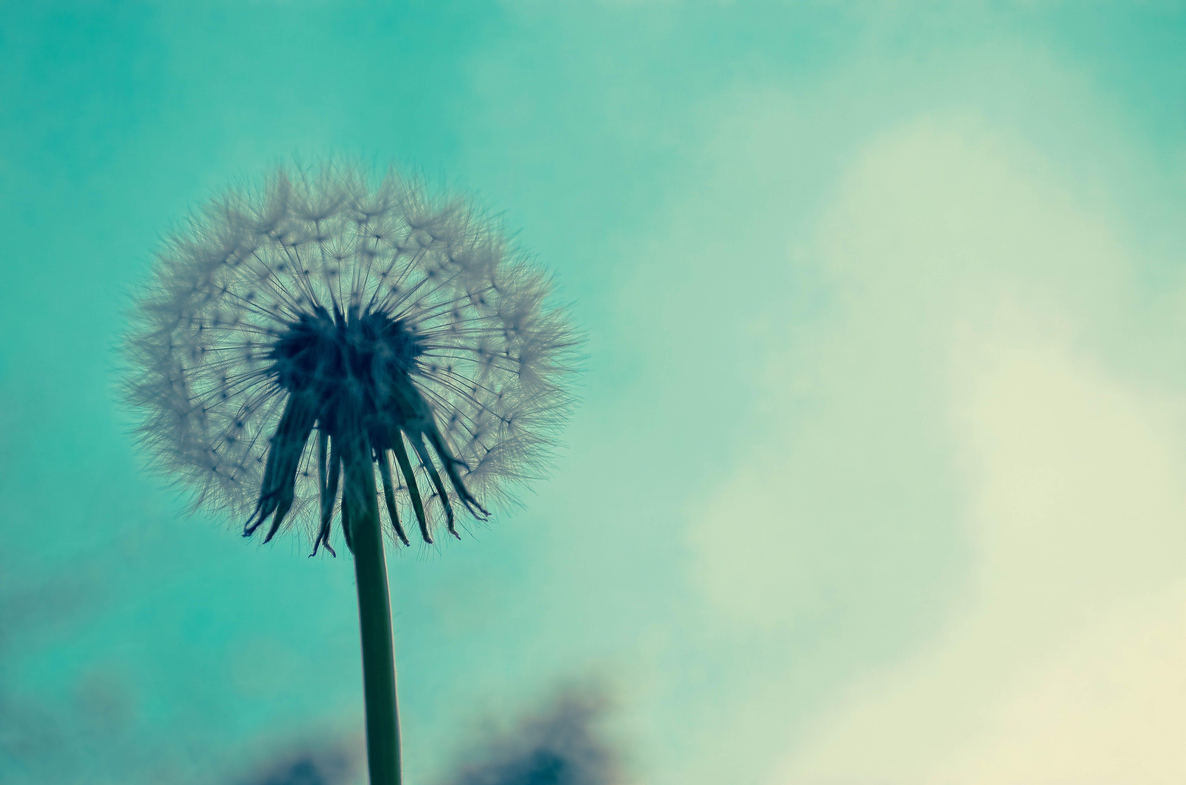 Kostenloses Stock Foto zu aufnahme von unten, blume, farbe, flora