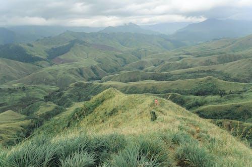 Gratis stockfoto met Azië, bergruggen, groen, hond