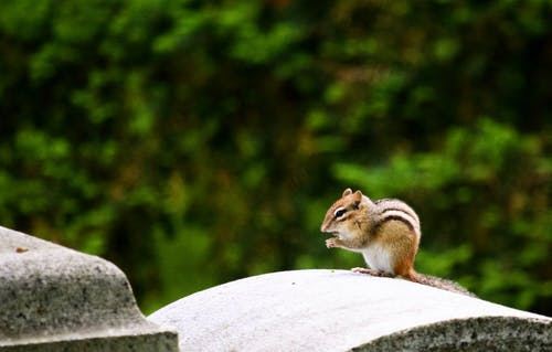 Brown Squirrel on a Gray Cement Arch