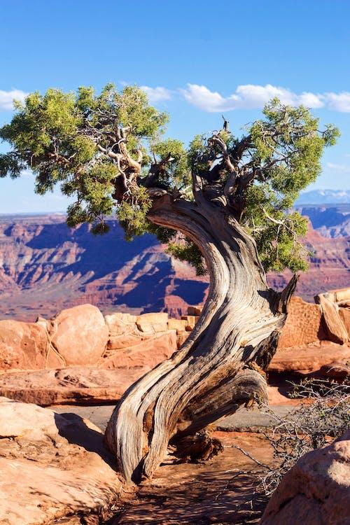 乾的, 侵蝕, 岩石, 景觀 的 免費圖庫相片