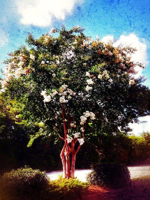 Fotobanka sbezplatnými fotkami na tému #flowers, #grungestyle, #mobilechallenge, #nature