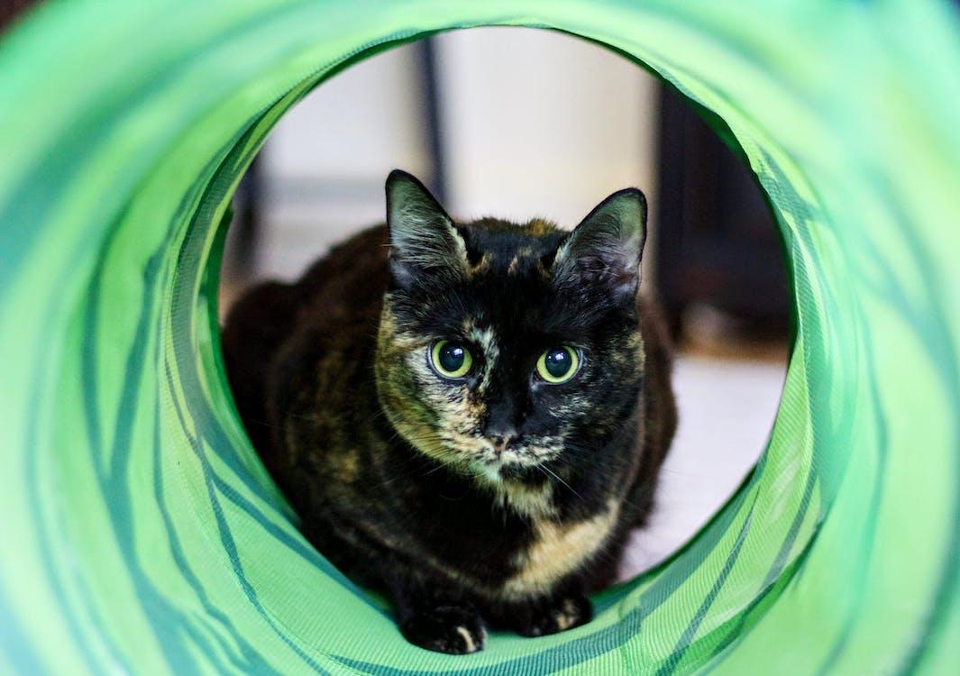 evcil hayvan portresi, hayvan, hayvan fotoğrafçılığı
