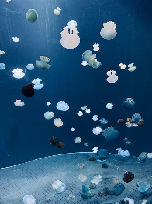 Fotos de stock gratuitas de acuario, acuático, agua, agua salada