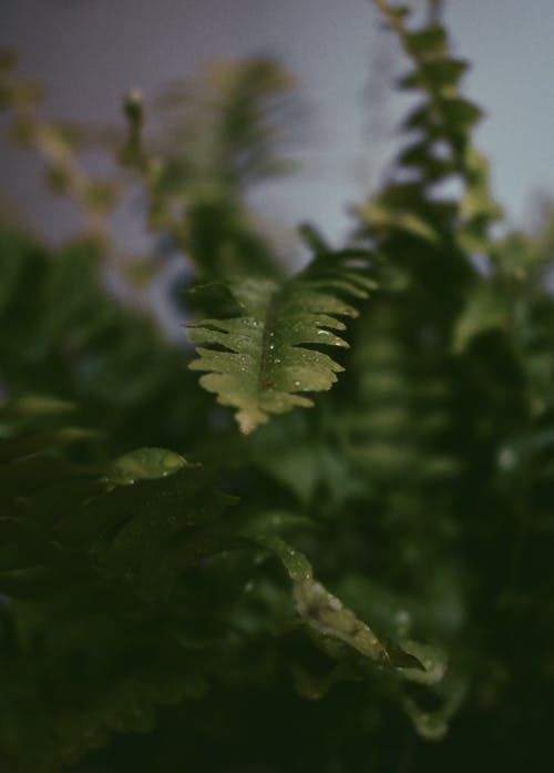 Selective Focus Photography of Green  Fern Leaves